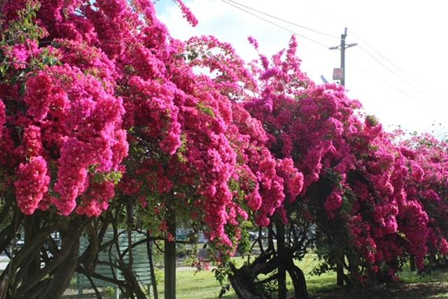 Garden Talk: Pruning Shrubs and Trees