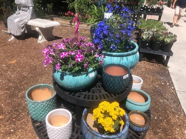 Garden Talk: Tropicals for the Hot Summer