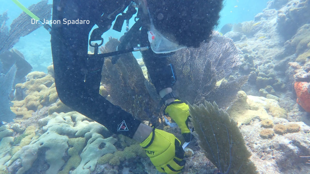 Students work to restore Florida's endangered coral reefs