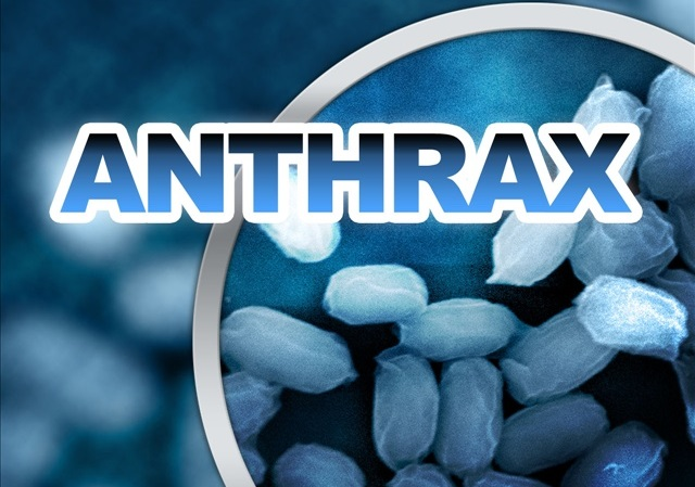 anthrax report Anthrax, a highly infectious and fatal disease of mammals and humans, is caused by a relatively large spore-forming rectangular shaped bacterium called bacillus anthracis.