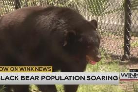 bearhuntnewthumb