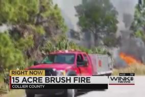 brushfirecollierthumb