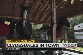 clydesdale4thumb