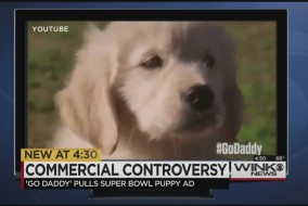 commercialcontroversypuppy