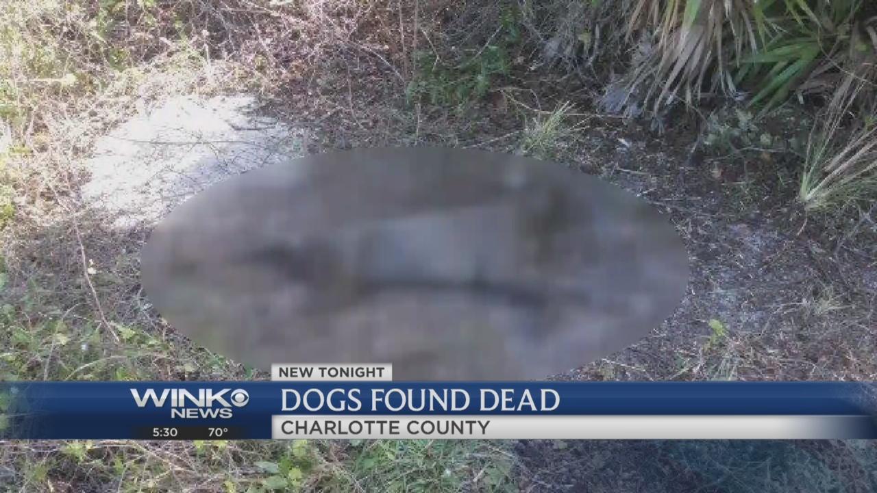 Coydog Nh: Port Charlotte Family's Dogs Found Dead