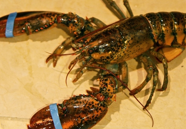 Record-high prices boost Florida Keys spiny lobster season