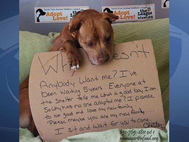 Adopt A Dog Inc Ny